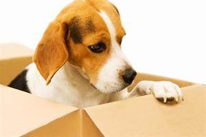 Importation of Pets